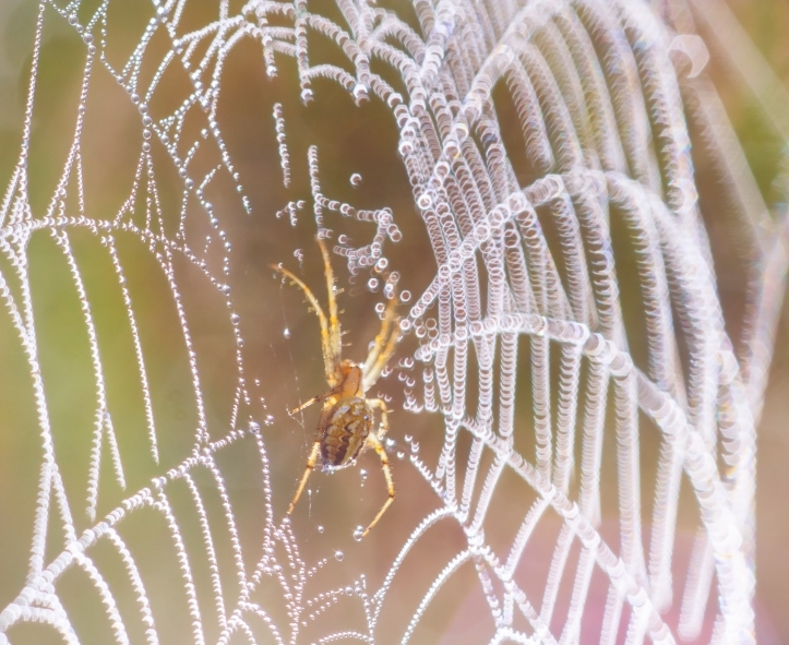 Web of life, intricate, complicated, intertwined